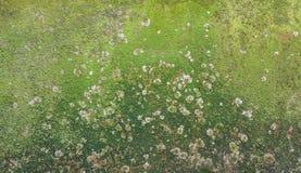 Musgo y molde en la pared Foto de archivo