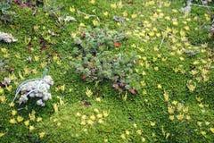 Musgo y plantas en la mucha altitud Fotografía de archivo
