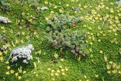 Musgo y plantas en la mucha altitud Imagenes de archivo