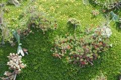Musgo y plantas en la mucha altitud Foto de archivo