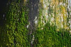 Musgos que crecen en tronco de árbol Fotos de archivo