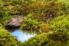 Musgos y un pequeño charco del agua que refleja el cielo Imagen de archivo libre de regalías