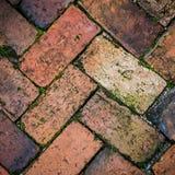 Musgoso no tijolo úmido Foto de Stock