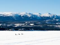 Musher σκυλιών ελκήθρων στη λίμνη Laberge YT Καναδάς στοκ εικόνα