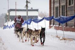Musher и собаки в гонке собаки скелетона Стоковое Фото