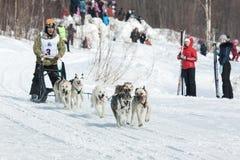 Musher court la luge tirée par des chiens sur la voie neigeuse Images libres de droits