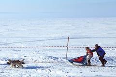 Musher d'emballage de crabot de traîneau de l'hiver et chien de traîneau sibérien Images libres de droits