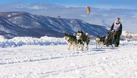 Musher da mulher que esconde atrás do trenó na raça de cão de trenó na neve nos wi Fotos de Stock