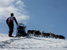 Musher dans l'aktion Images stock