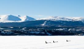Musher de chien de traîneau sur le Canada de Laberge YT de lac image libre de droits