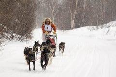 Musher et chiens dans la course de chien de traîneau Photos libres de droits