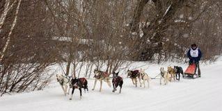 Musher et chiens dans la course de chien de traîneau Image libre de droits