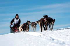 Musher hiding behind sleigh at sled dog Stock Photo