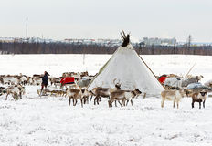 Musher of Nenets nationality makes a nomad camp at an outskirts of Labytnangi city. Royalty Free Stock Photos