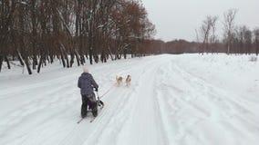 Musher que oculta detrás de trineo en la raza de perro de trineo en nieve en invierno metrajes