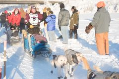 Musher Ryne Olson waves to fans. FAIRBANKS, ALASKA - FEBRUARY 3, 2018: Race veteran Ryne Olson, from Two Rivers, AK, waives to race fans as she heads down the Stock Photos