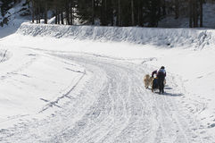 Musher and team of sled dog from the back Stock Photography