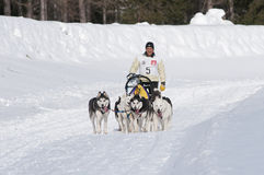 Musher and team of sled dog Stock Image