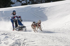 Musher and team of sled dog Stock Photography