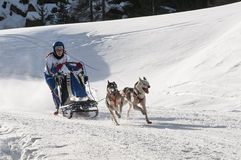 Musher and team of sled dog Stock Photo