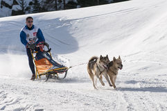 Musher and team of sled dog Royalty Free Stock Photo
