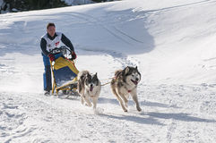 Musher and team of sled dog Stock Photos