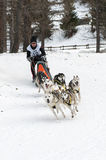 Musher and team of sled dog Royalty Free Stock Photos