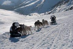 Musher und seins dogsled auf Kammbergen lizenzfreies stockbild