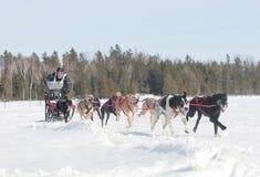 mushing βόρειο ont Στοκ φωτογραφίες με δικαίωμα ελεύθερης χρήσης