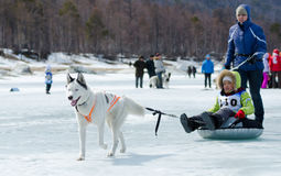 Mushing at Baikal Fishing 2012 Royalty Free Stock Photography