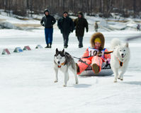 Mushing bei Baikal, der 2012 fischt Lizenzfreie Stockfotografie