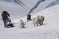 When mushing is hard work Royalty Free Stock Photography