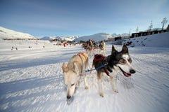 Mushing im Alpe d Huez, Frankreich Stockfotos