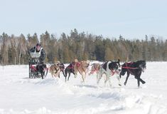Mushing in Nordontario Lizenzfreie Stockfotos