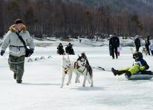 Mushing på Baikal som fiskar 2012 Royaltyfri Foto
