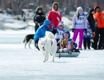 Mushing sur les chiens enroués chez Baikal pêchant 2012 photographie stock libre de droits