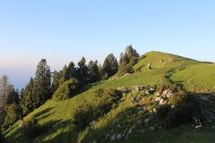 Mushkpuri w Pakistan zdjęcia royalty free
