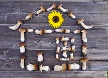 Mushrom牛肝菌蕈类房子标志概念用向日葵 库存图片