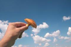 Mushrom in der Hand Stockbild