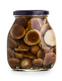 Mushromms marinaded Fotografering för Bildbyråer
