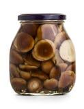 Mushromms marinaded Stock Image