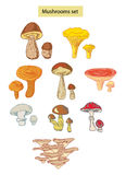Mushroms set hand drawn illustrations. Isolated on white royalty free illustration