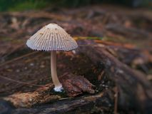 MushroomA& x28; или toadstool& x29; Стоковые Фотографии RF