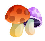 Mushroom. Two color mushroom with spots on the white background Royalty Free Stock Photos