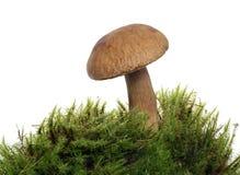 Free Mushroom Royalty Free Stock Photos - 10699738