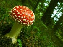 Free Mushroom Stock Images - 11031144