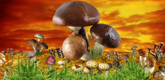Mushroom. Funny mushroom meadow, concept background Stock Photo