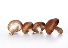 Mushroom. Isolated on a white background Stock Photo