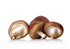 Mushroom. Isolated on a white background Royalty Free Stock Image