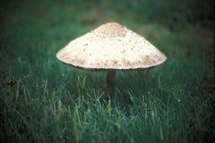 Mushroom Royalty Free Stock Photography